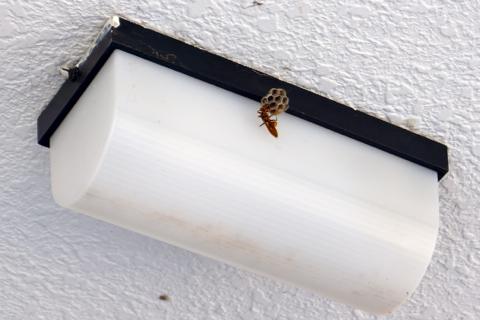 ハチの巣駆除!