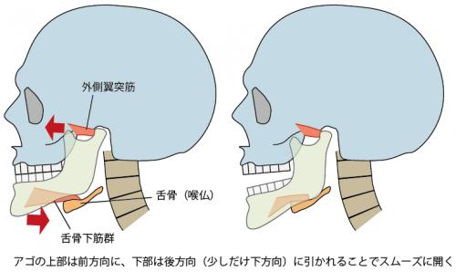 正常な姿勢での口の開閉